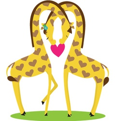 two giraffes male and female nestled together in t vector image