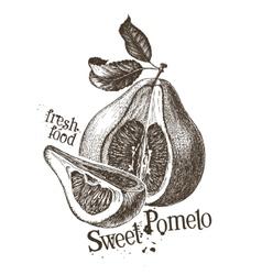 pomelo logo design template fresh fruit vector image