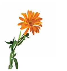 Beautiful aster flower isolated on white vector