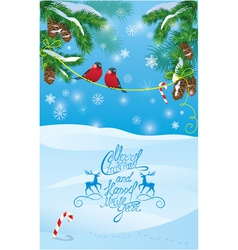 Card with fir tree branches and bullfinch birds vector image