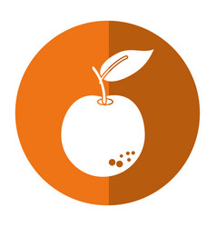 orange citrus fruit icon shadow vector image