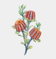 Watercolor australian banksia composition vector
