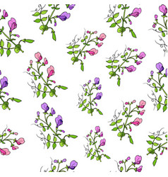 seamless pattern with sweet pea vector image vector image