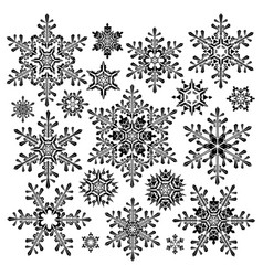 Blossom of snow vector