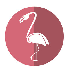 flamingo bird tropical shadow vector image