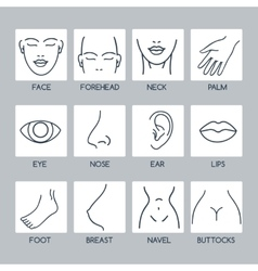 Parts of human body icons vector