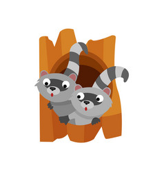 two cute raccoons peeping out of the hollow vector image