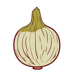 White background with onion in closeup with thick vector