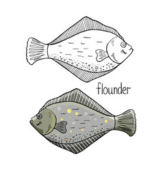 hand drawn flounder fish black and white and vector image