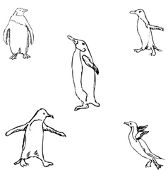 Penguins A sketch by hand Pencil drawing vector