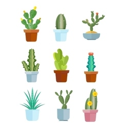 Cartoon cactus desert plants icons vector