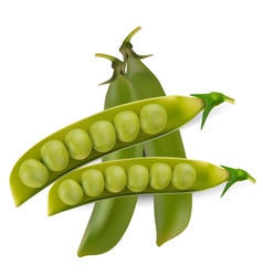 green peas vegetable with seed vector vector image
