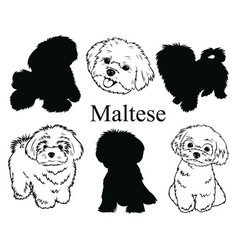 Maltese set collection pedigree dogs black vector