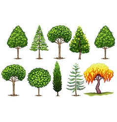 Set of different types of trees vector