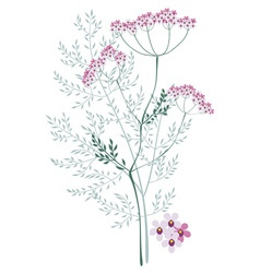 Valerian meadow plant vector