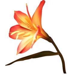 amaryllis vector image vector image