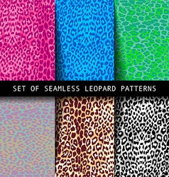 Set of leopard seamless patterns vector image vector image