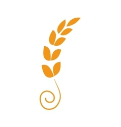 Wheat plant Agriculture design graphic vector image vector image