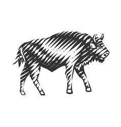 beautiful bison vector image