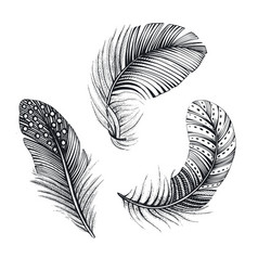collection three natural bird feathers vector image
