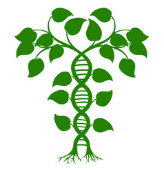 dna nature plant vector image
