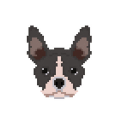 French bulldog head in pixel art style vector
