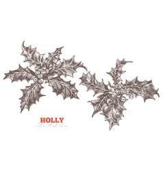 holly berry european symbol eve and christmas vector image