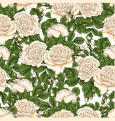 seamless floral pattern with roses hand draw vector image