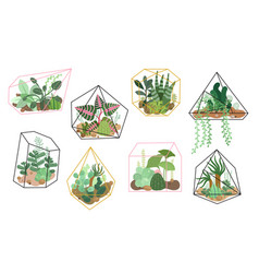 succulents plants stylish floral decor home vector image