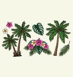 tropical plants colorful vintage concept vector image
