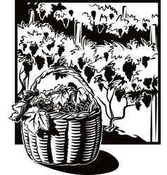 wicker basket full of ripe grapes vector image