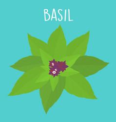 fresh basil leaf vector image vector image