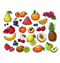cartoon berries and fruits pineapple grapes pear vector image