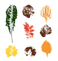 Colored leaves stamps vector