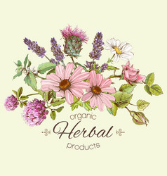 herbal composition vector image