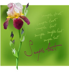 beautiful flower iris vector image