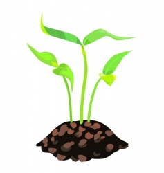 Green sprouts in land vector