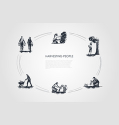 harvesting people - people picking fruits and vector image