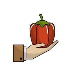 Organic pepper vegetable in the hand icon vector