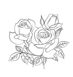 Rose sketch on white background vector