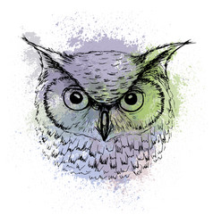 sketch owl head on a background colored vector image