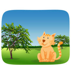a cute cat in nature vector image