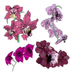 Colorful drawing orchids collection vector
