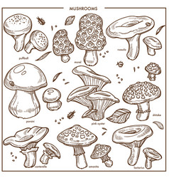 edible mushrooms sketch icons champignon vector image