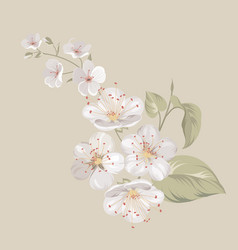 White cherry blossom flowers vector