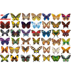 a set of beautiful butterflies vector image
