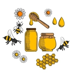 Beekeeping and farm honey icons vector image