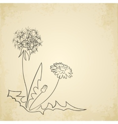 Dandelion pencil artwork on paper background vector image