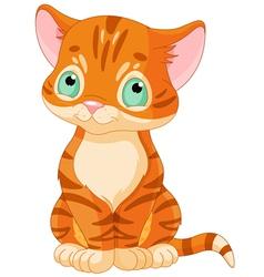 Cute Tabby Kitten vector image vector image