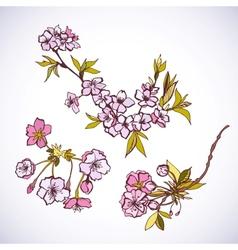 Blossoming sakura decorative elements vector
